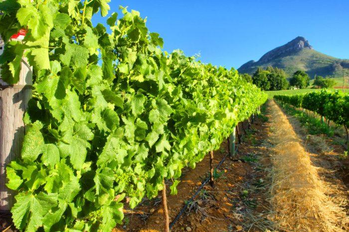 Private Cape Winelands Day Tour