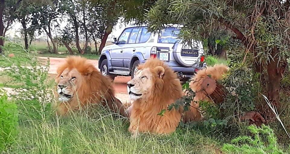 The Magic of the Lion Park Safari in Johannesburg