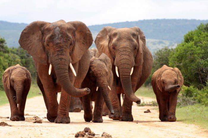 Kruger National Park 2 Days 1 Night Magical safari From Johannesburg