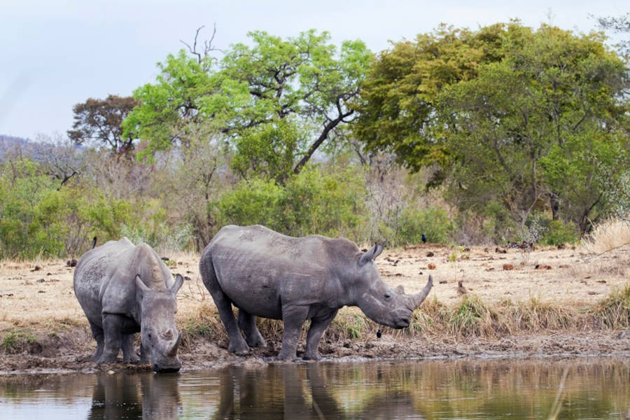 Kruger National Park Safaris from Cape Town
