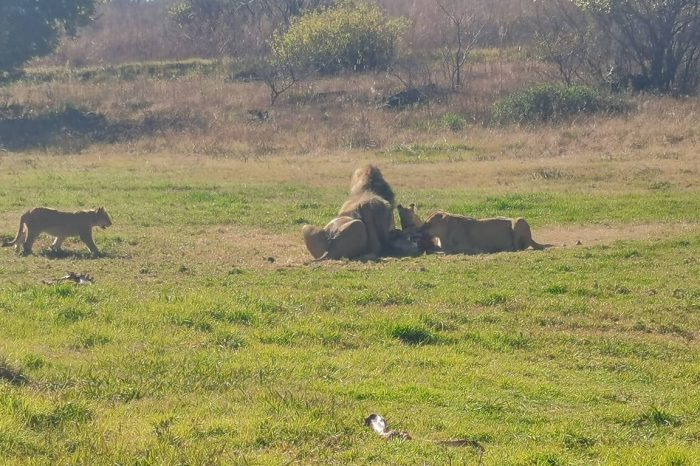 Lion and Rhino Safari with Wonder Cave Day Tour